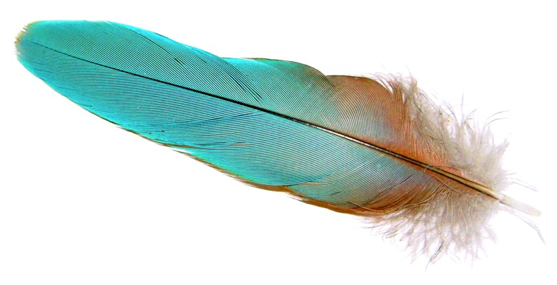 feather travel